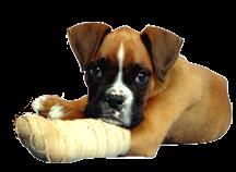 Hond met een gebroken poot in het gips.