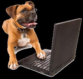 Hond achter laptop
