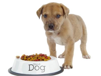 Hond eet van zijn hondenbrokken