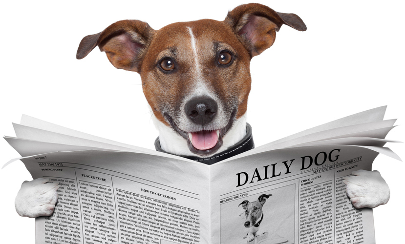 Hond leest nieuws uit krant