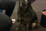 Wie is de eigenaar van deze in Holten gevonden hond?