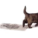 Puppy die krantzindelijk is: dus zijn behoefte doet op een krant
